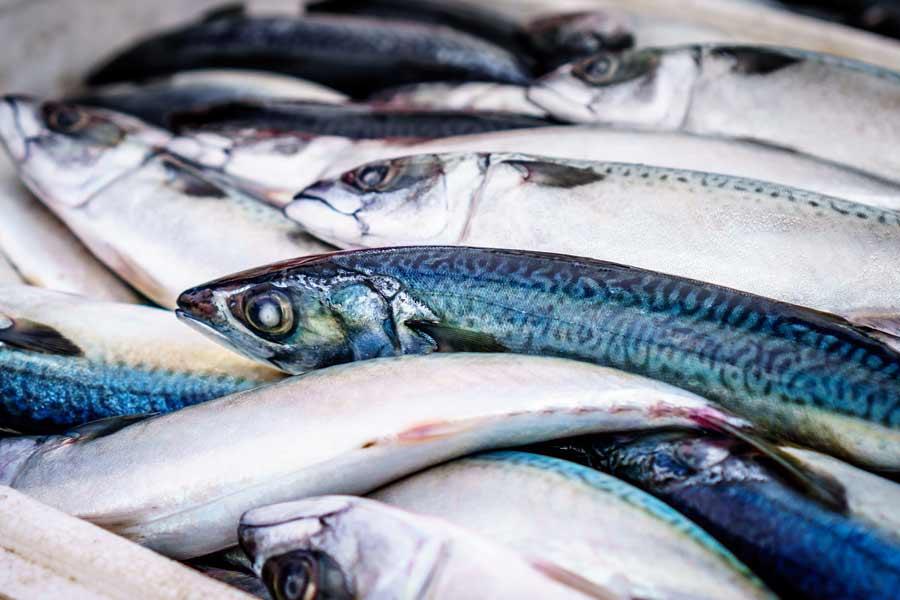 Eventyrlig januarmåned for sjømateksporten